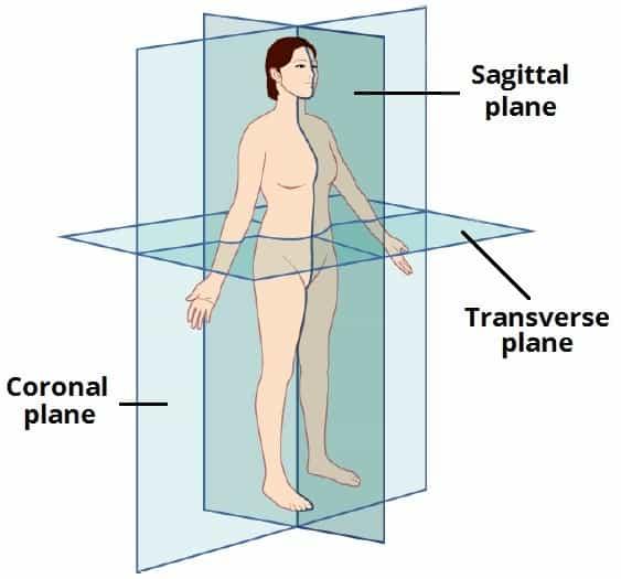 Transverzalna ravnina